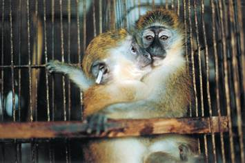 experimentation with animals should not be allowed In terms of ethic or scientific, the animal experiment all doesn't have proper reason some scientists think the people who against the animal experiment are too fussy, those scientists are very selfish and think the problem is really simple, victimize animals is for helping human.